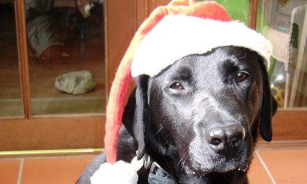A Dog is not just for Xmas