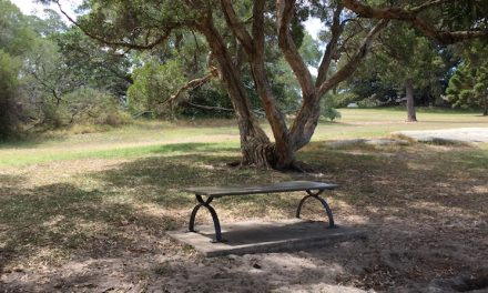 A bench for Queens Park Dog Walkers