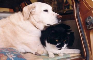 My First Dog - Duke with Tom